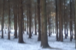 Seeing the wood from the trees. Are we taking too many site photos?