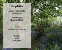 biophilic design 1