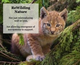 rewilding 1