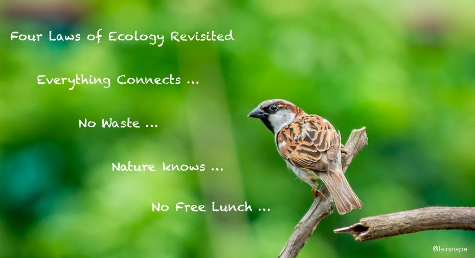 Four Lawas of Ecology